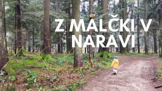 gozd Mali plac malcek Vrhnika